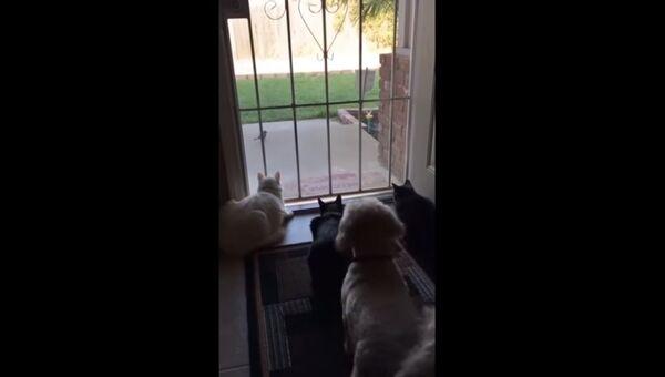 Собака перепугала котов