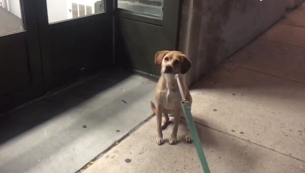 Пес готов ночевать у любимого магазина