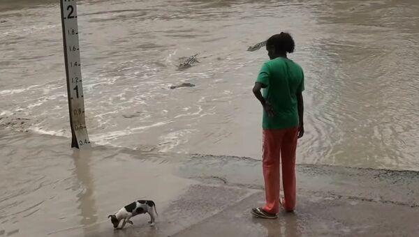 Жительница Австралии отпугнула крокодила тапком