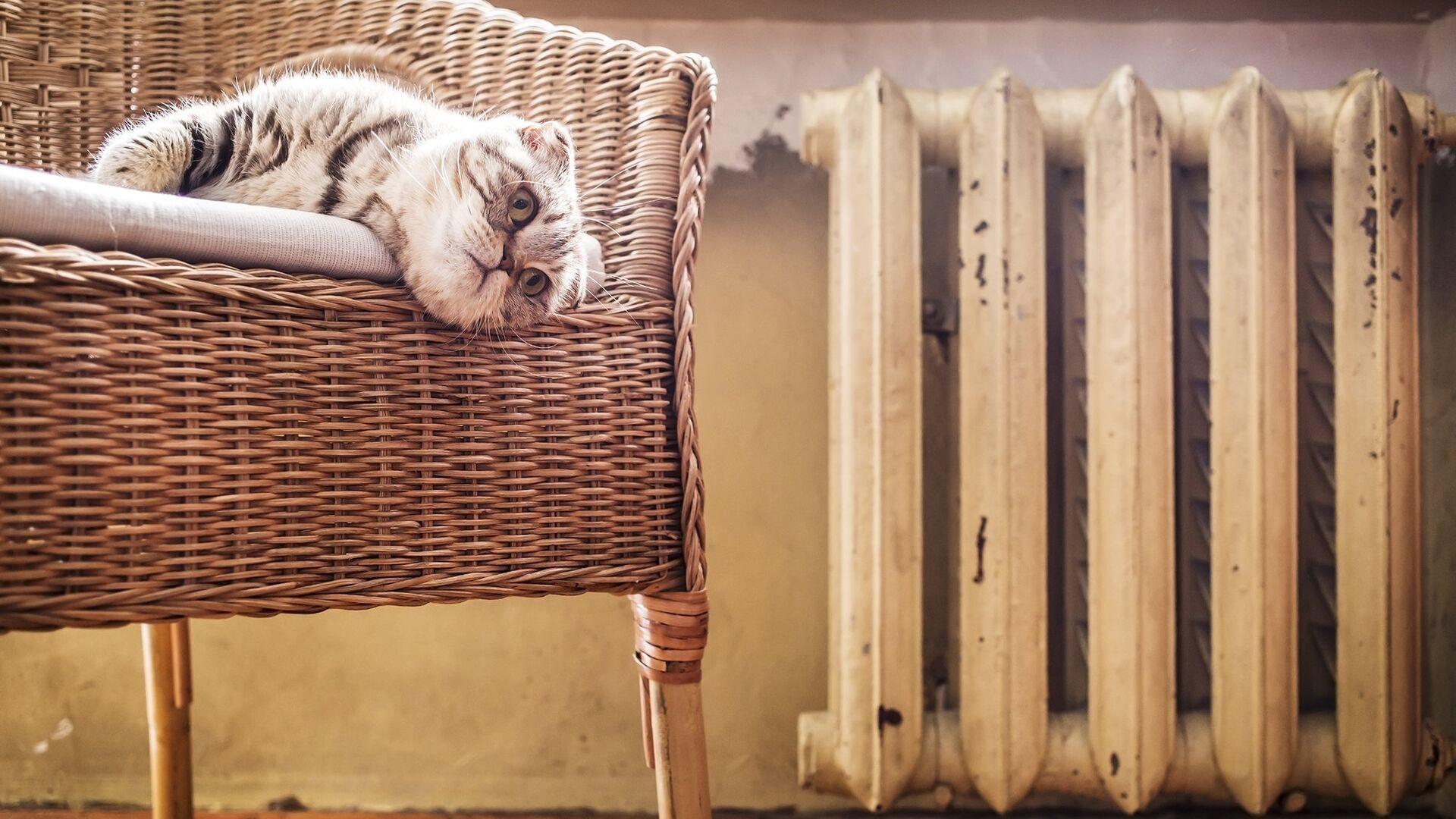 Кот в кресле у батареи - РИА Новости, 1920, 03.06.2021