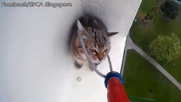 Невероятное спасение котенка заставит понервничать