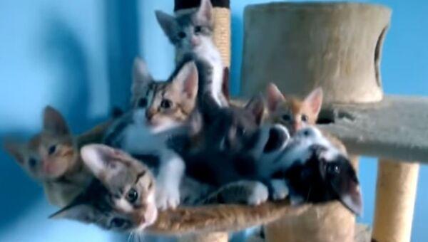 Танец маленьких котят