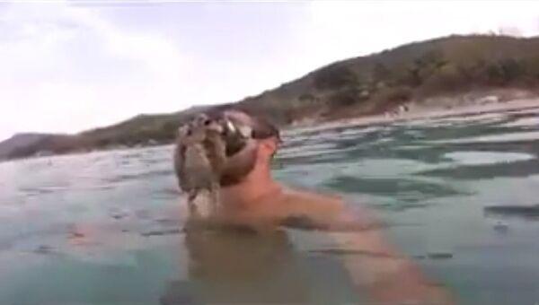 Неудачная встреча с осьминогом