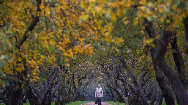 Женщина гуляет по яблоневому саду в парке Коломенское в Москве