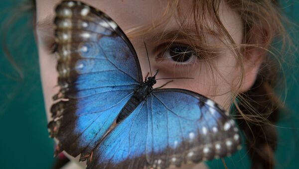 Бабочка в музее естественной истории в Лондоне. Архивное фото
