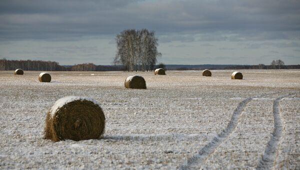 Запорошенные снегом стога на поле. Архивное фото