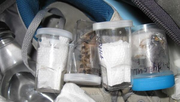 Россельхознадзор не пустил в Крым из Украины пауков в пластиковых стаканах