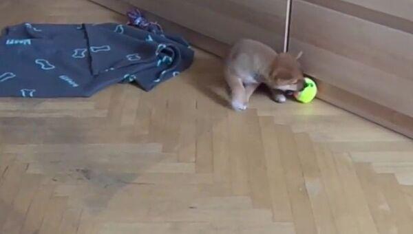 Щенок и мяч