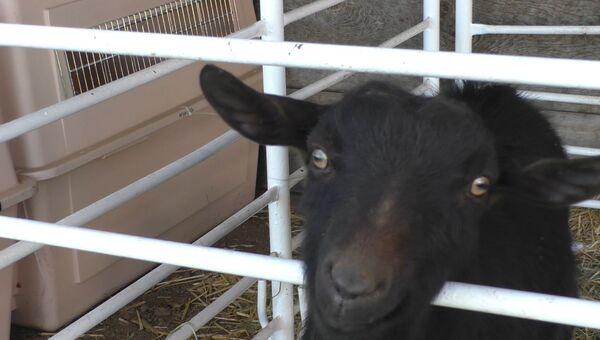 Звериная эвакуация: как волонтеры спасают домашних животных в Калифорнии