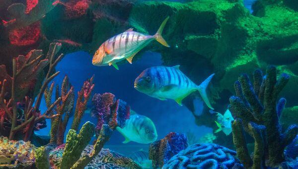 Обитатели океанариума. Архивное фото
