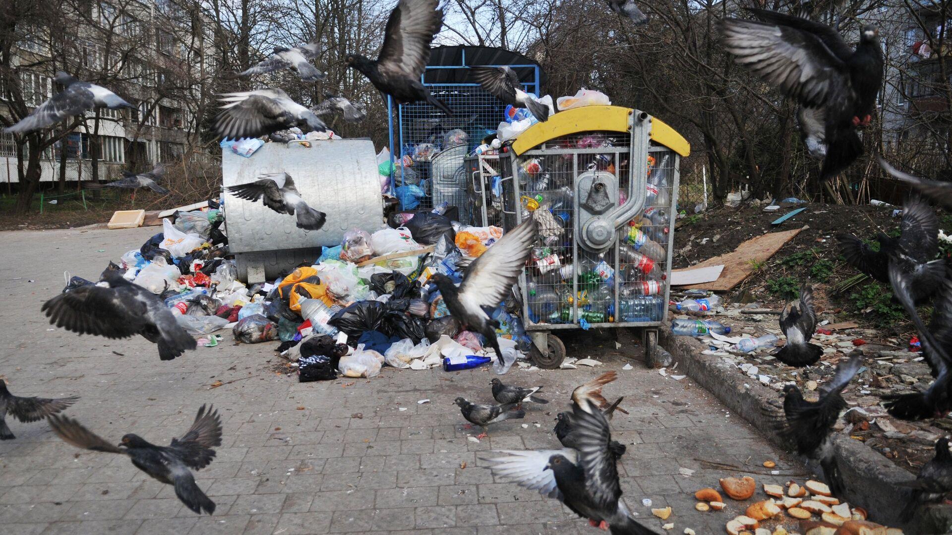 Невывезенный мусор во дворах Львова - РИА Новости, 1920, 28.03.2021