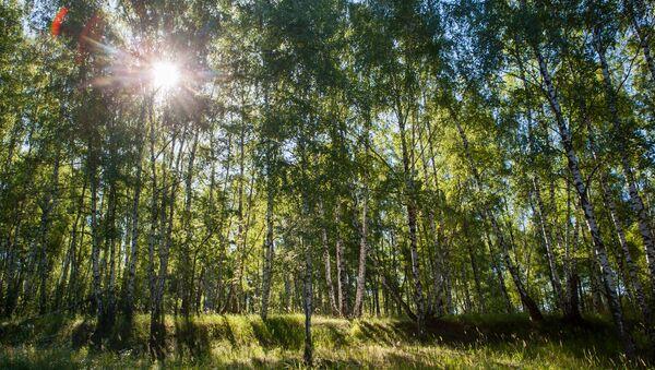 Деревья. Архивное фото