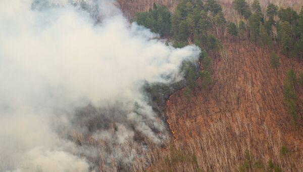 Хлопонин: за прошлый год в РФ в пожарах погибло более 200 тысяч га леса