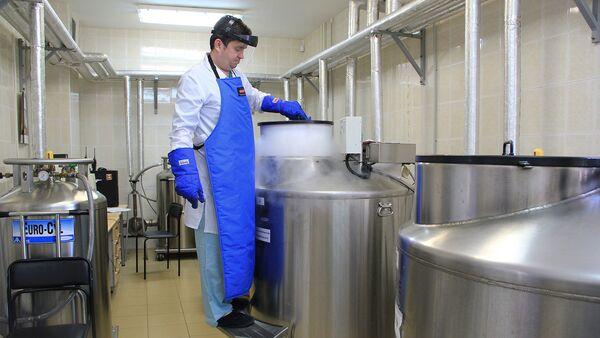 Врач-трансфузиолог достает кассеты с замороженными эритроцитами
