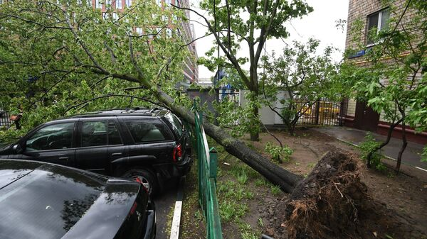 Сломанное ураганом дерево во дворе жилого дома в Москве