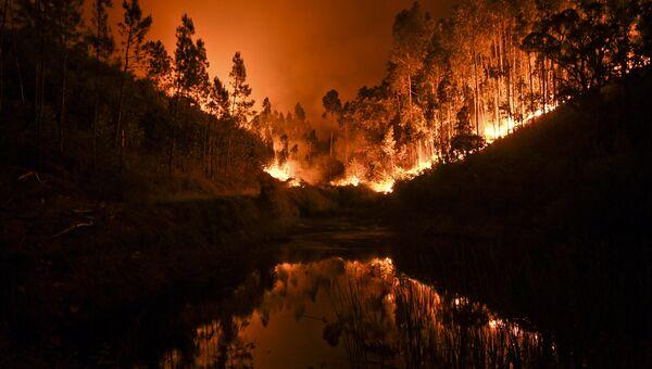 Лесные пожары в Португалии. Архивное фото