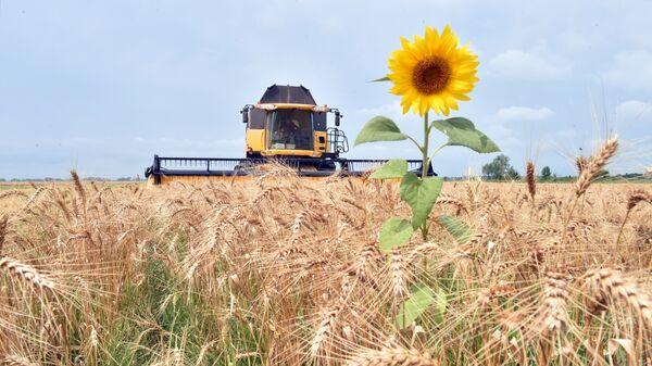Уборка зерна в поселке Малая Девица, Украина