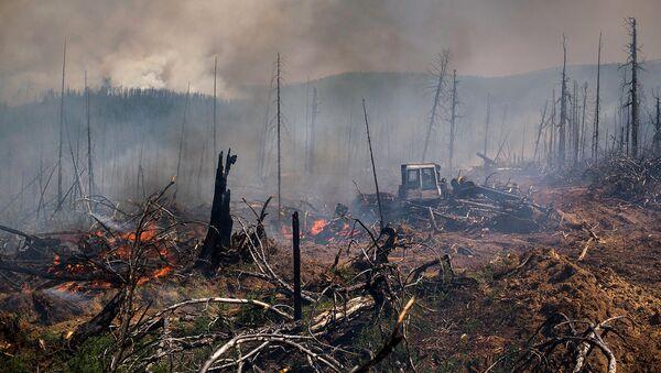 Ущерб от лесных пожаров в России составит более 9 миллиардов рублей