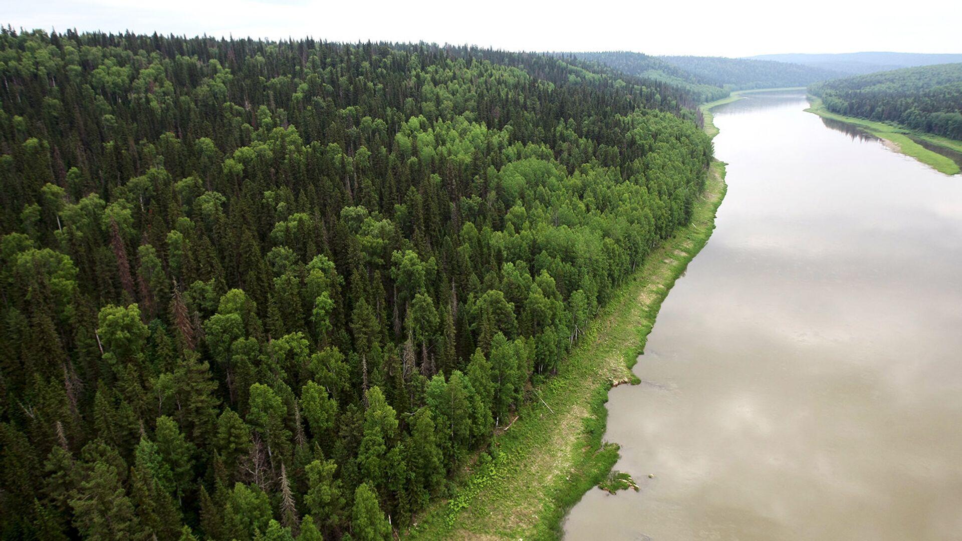 ОНФ предложил меры для улучшения экологии в Сибири и на Дальнем Востоке - РИА Новости, 1920, 30.09.2020