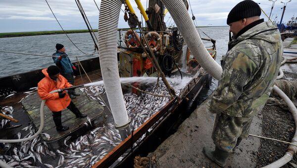 Разгрузка минтая рыбонасосом с борта малого рыболовного сейнера