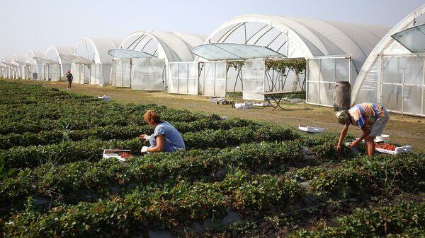 Фермерское хозяйство в Краснодарском крае