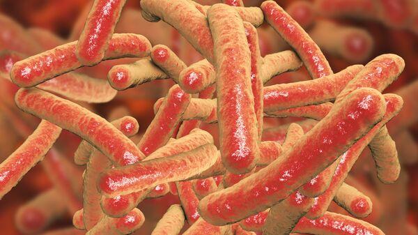 Бактерии Mycobacterium tuberculosis, возбудитель туберкулеза. Архивное фото