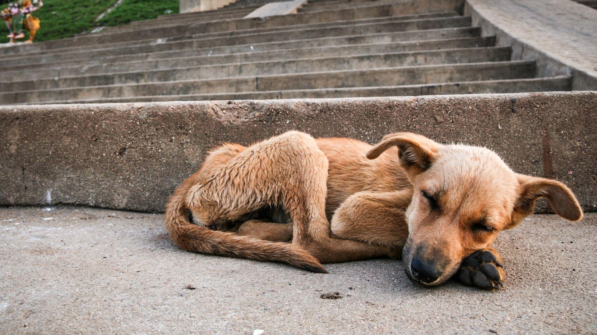 Бездомная собака - РИА Новости, 1920, 11.05.2021