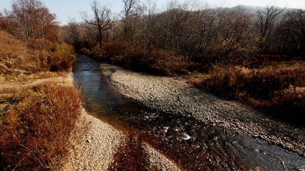 Число лососевых на реках «Земли леопарда» превысило показатели прошлых лет