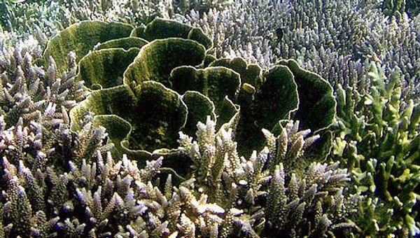 Кораллы, водоросли. Архив