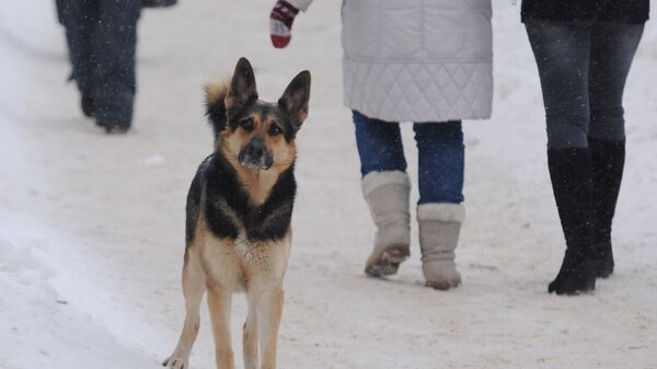 Бездомный пес на одной из улиц Великого Новгорода