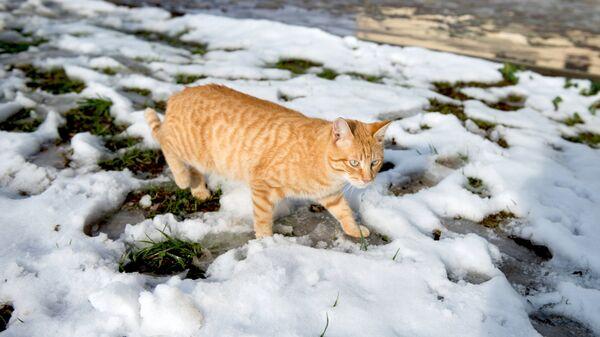 Кошка идет по снегу в Приморском парке в Сочи