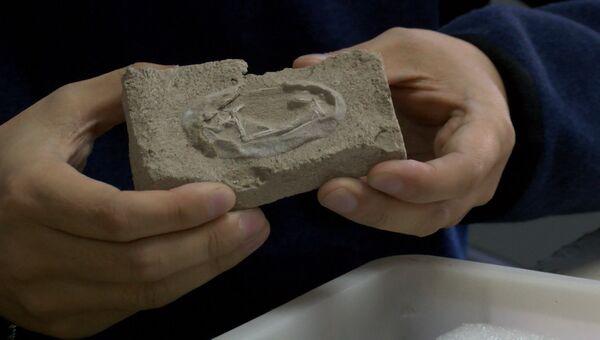 Эмбрион птерозавра и 215 яиц: палеонтологи изучают уникальные находки