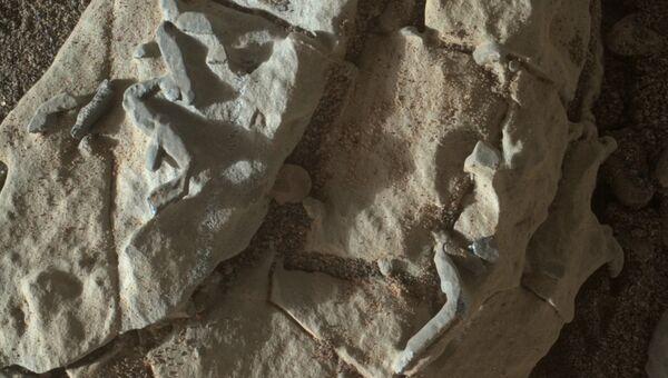 Окаменелости, найденные на Марсе