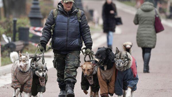Женщина выгуливает собак на улице в Москве