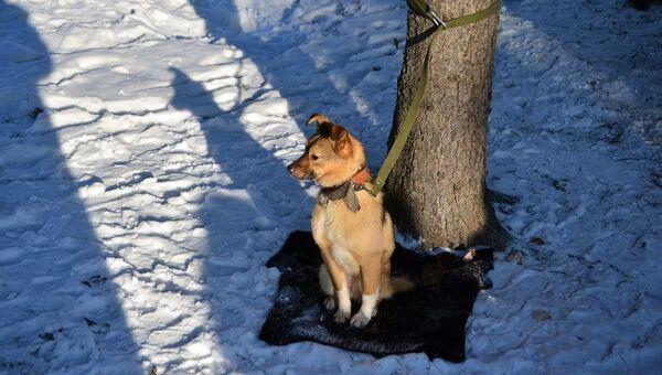Собака в пострадавшем от пожара приюте для животных Преданность в Бийске