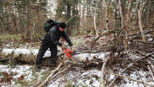 Расчистка леса инспекторо. Архив
