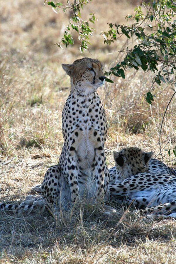 ООН включила в список исчезающих еще более 20 видов животных