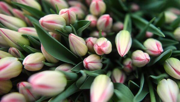 Тюльпаны. Архивное фото