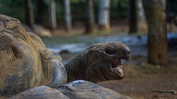 Черепаха. Архивное фото.