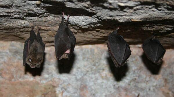 Летучие мыши во время спячки