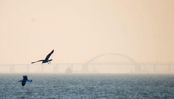 Чайки на фоне Крымского моста