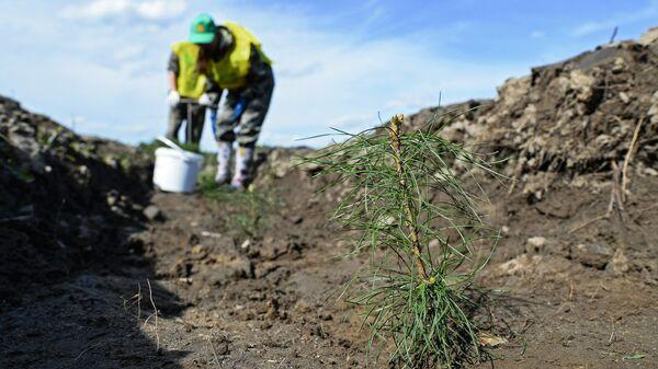 Активисты ОНФ посадили деревья, приобретенные на средства президента РФ