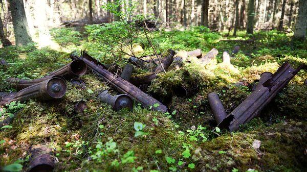 Свалка в лесу
