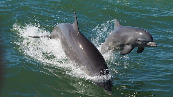 Самка дельфина с детенышем