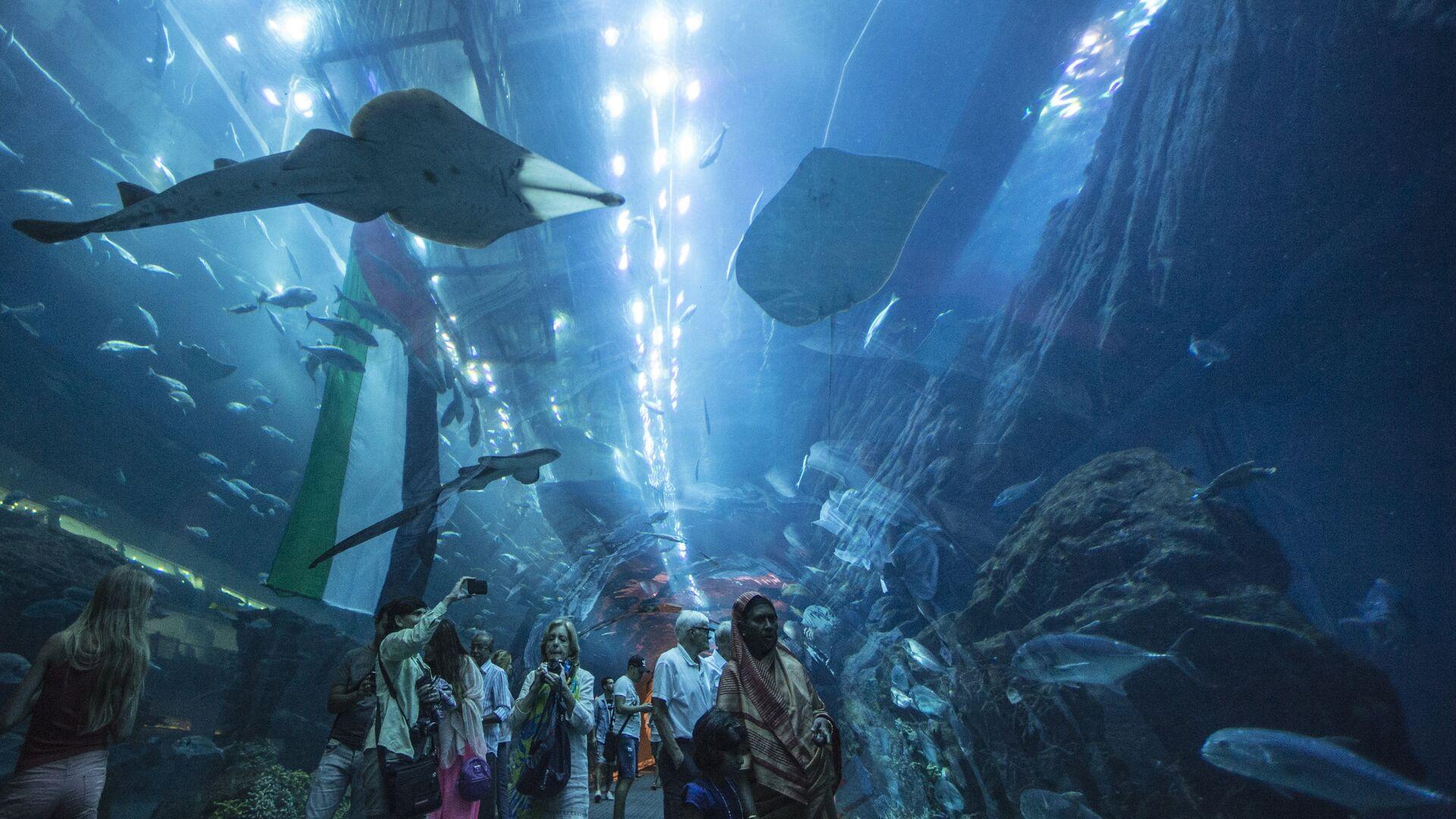 Дубайский Океанариум и подводный зоопарк - РИА Новости, 1920, 11.10.2021