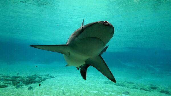 Акула у побережья Голд-Кост в Австралии