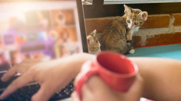 Котенок возле ноутбука