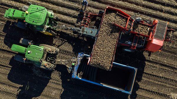 Сбор урожая картофеля для Макдоналдс в поле ООО Белая дача в Тамбовской области