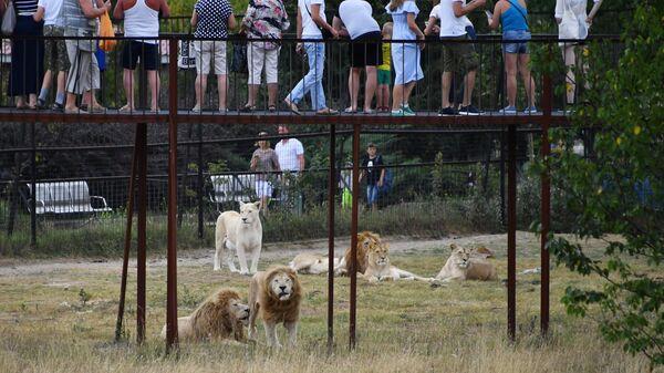 Посетители и львы в крымском сафари-парке Тайган
