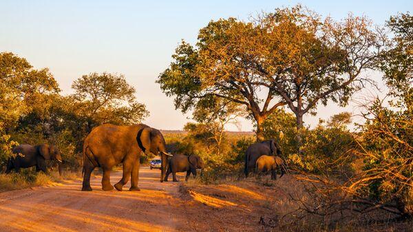 Стадо слонов в Национальном парке Крюгера, ЮАР